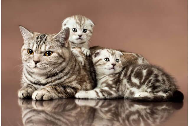 猫の育て方アドバイザーの口コミ評判